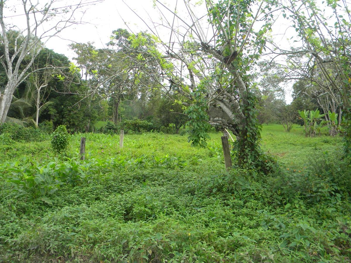 River lot in Bullet Tree