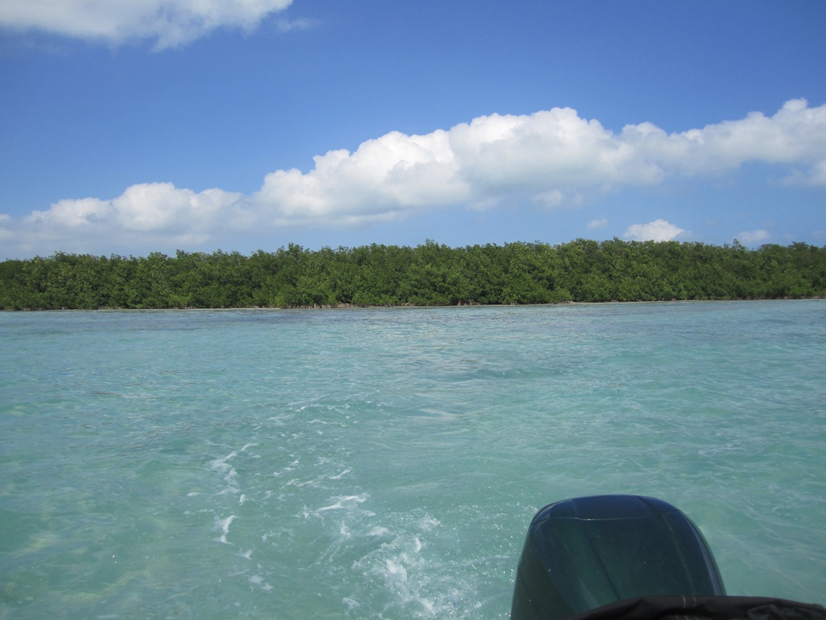 Land in Hick's Caye