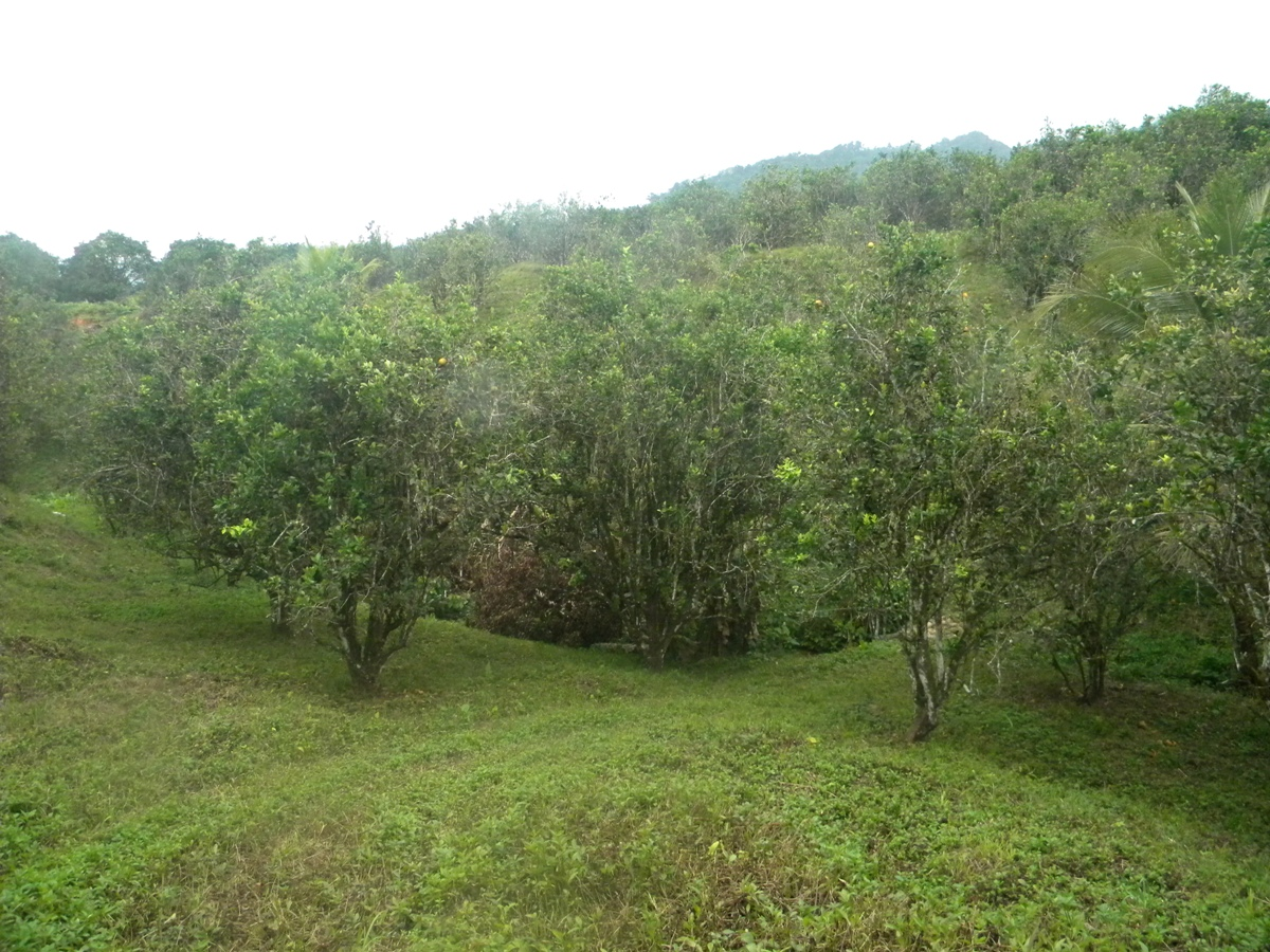 24.16 Acre Farm off the Hummingbird Highway