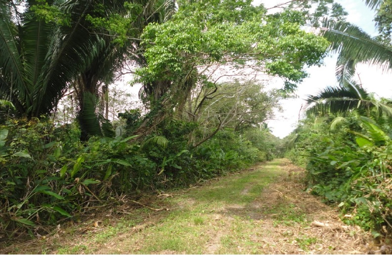 30 Acre Farm Land for Sale in Scotland Halfmoon Belize