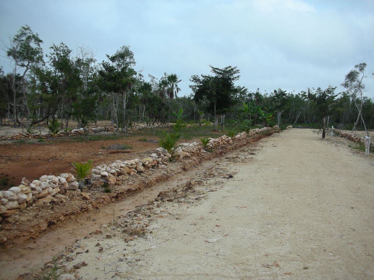 Orchid Bay lot in Corozal District