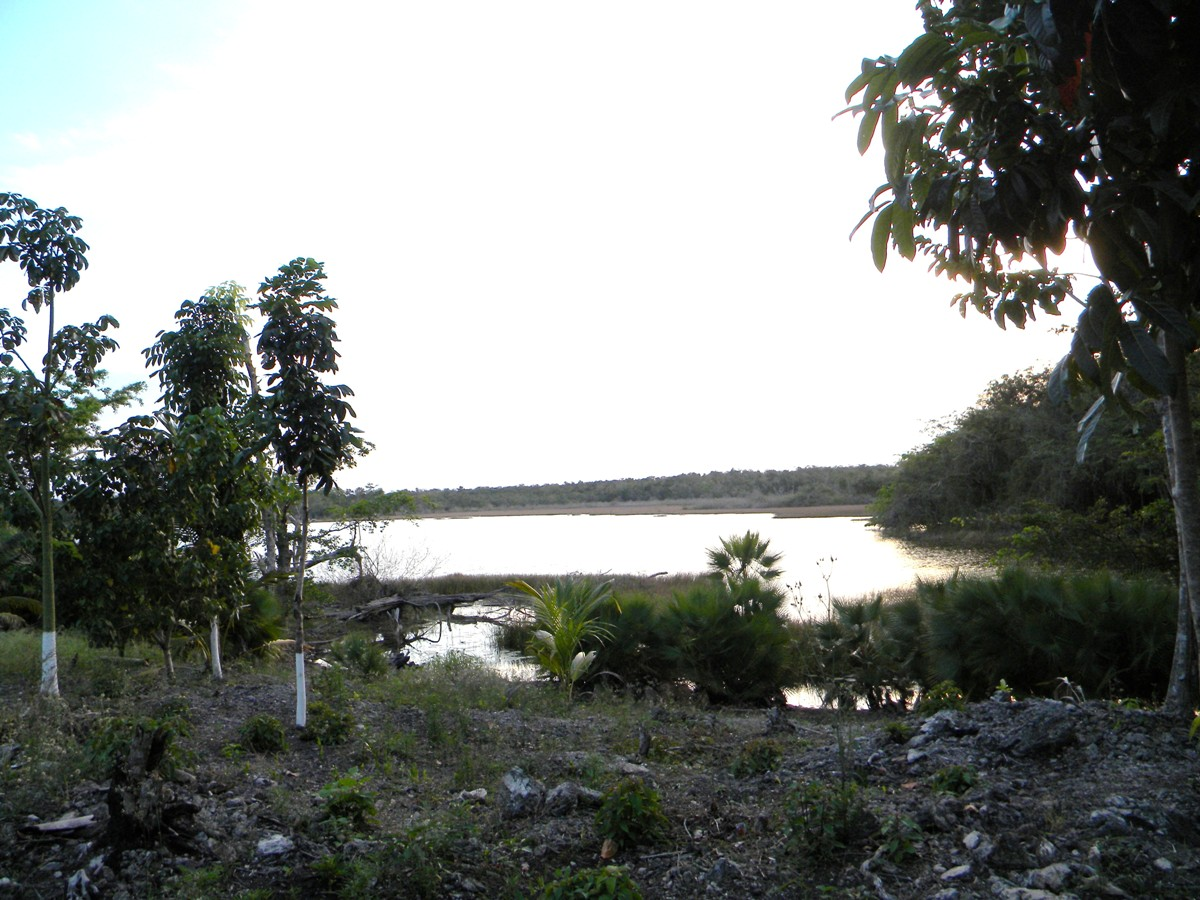 Lagoonfront Property in Progresso Heights