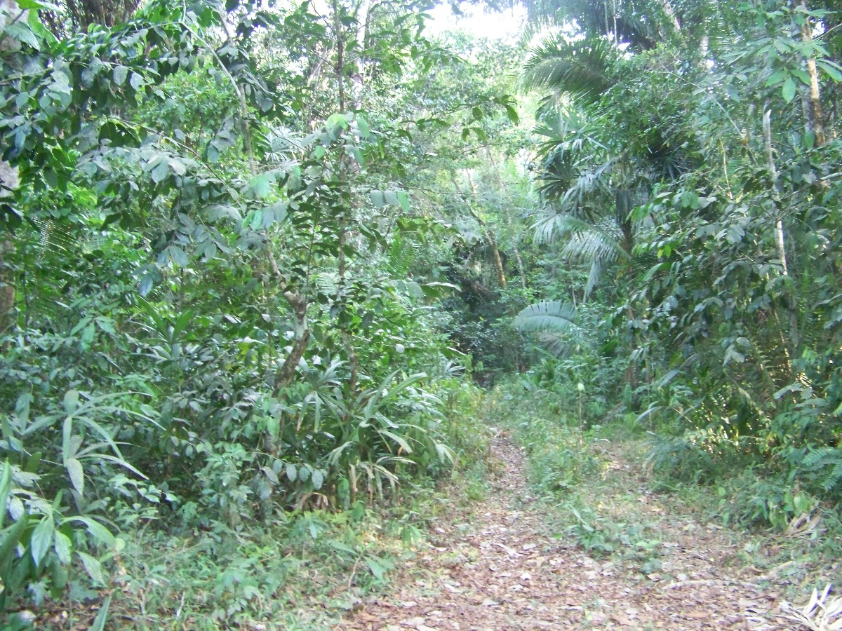 Land for Sale in Cayo 100 acres