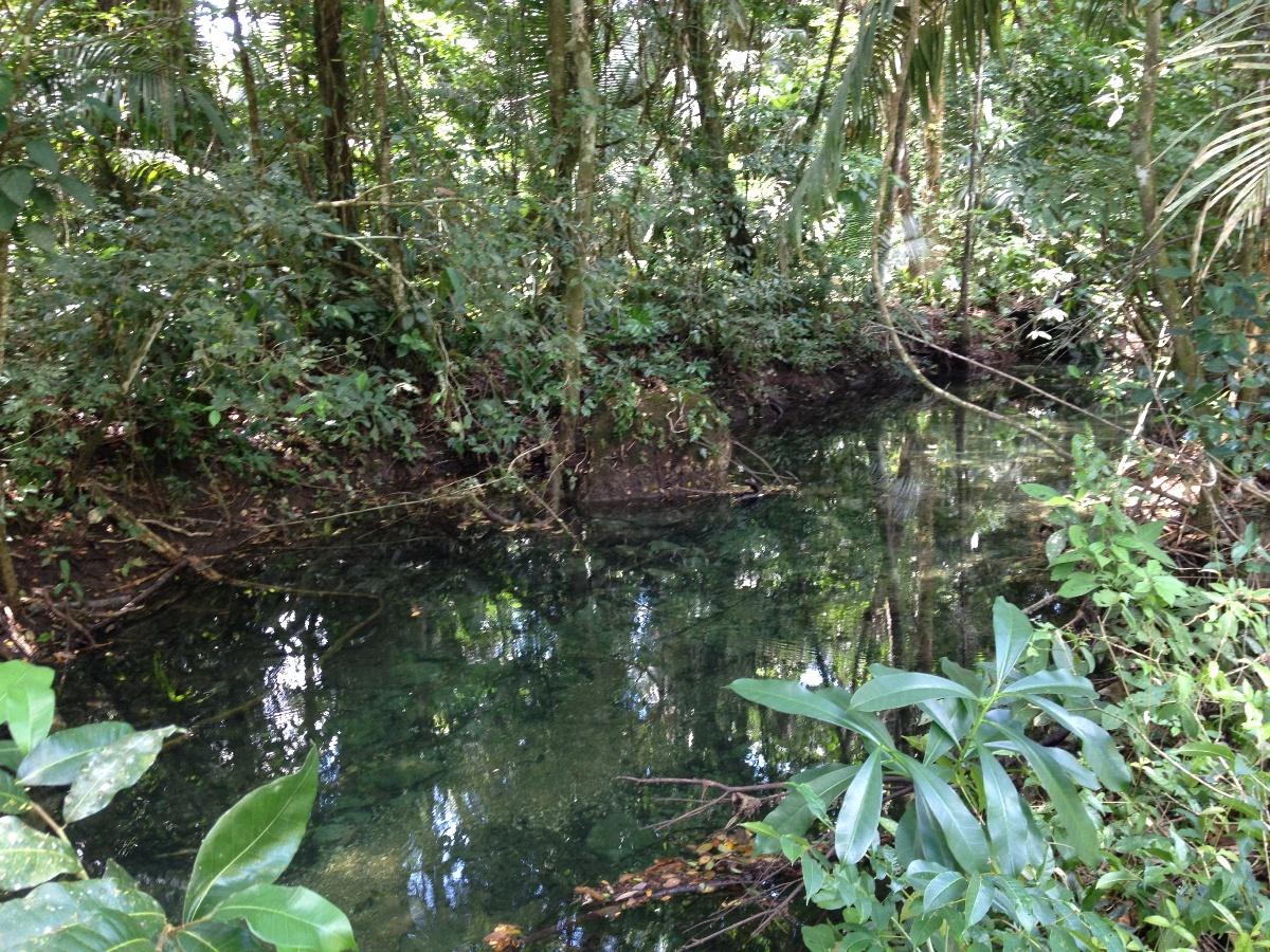 2000 acres of beautiful Rainforest Land