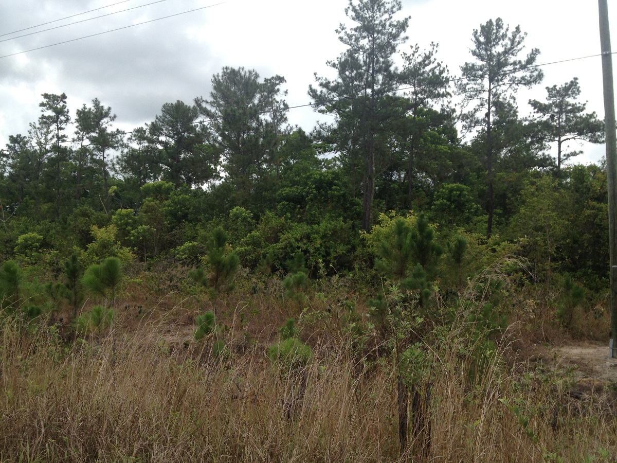 106 Acres along the Southern Highway