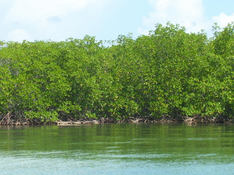 Land for Sale in Southern Long Caye, Belize