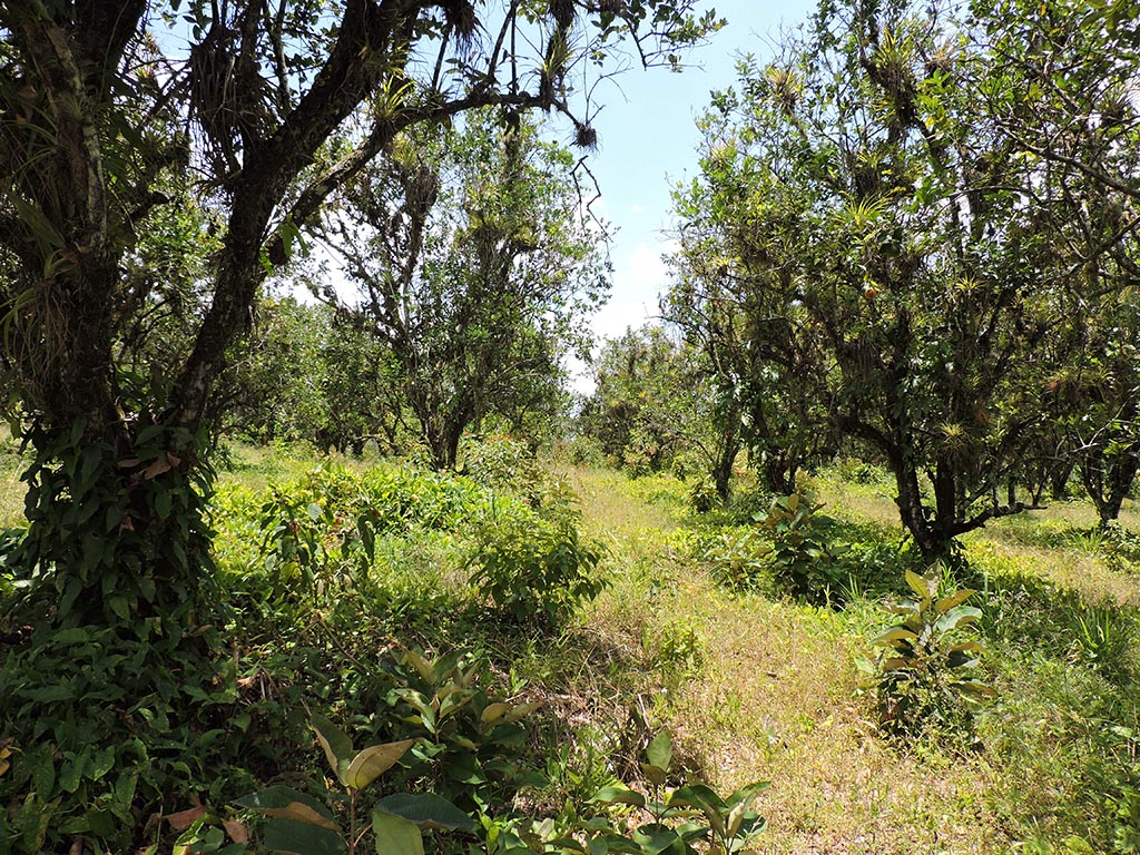 30 Acres of Land on the Hummingbird Highway