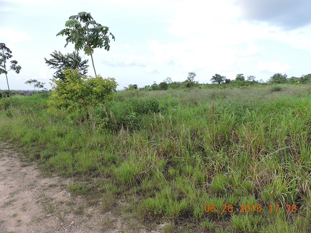 Large Parcel of Land in Belmopan