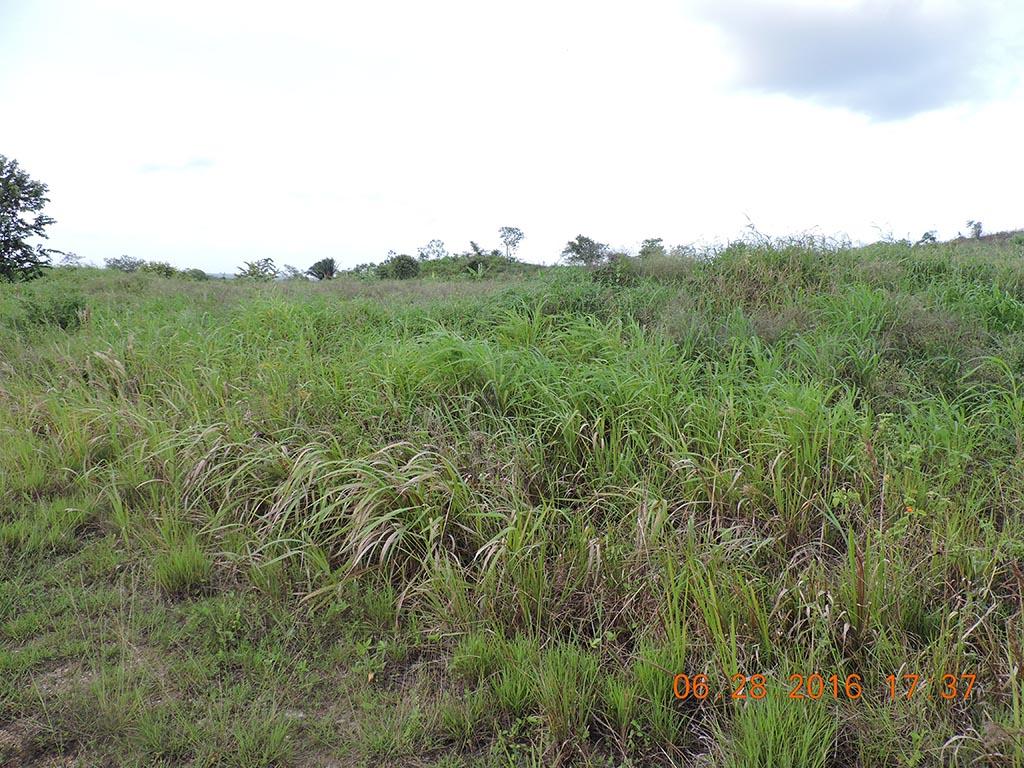 50 Acres of Land in Belmopan