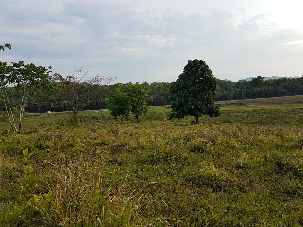 63 Acre Jungle Land on Southern Highway