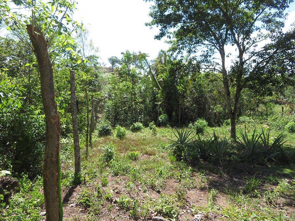 Large lot in West Belmopan