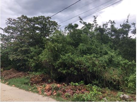 Residential Lots for Sale in San Marcos Area of San Pedro Town