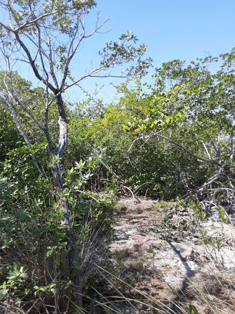 Beautiful 2 Acre Island for Sale in Northern Belize