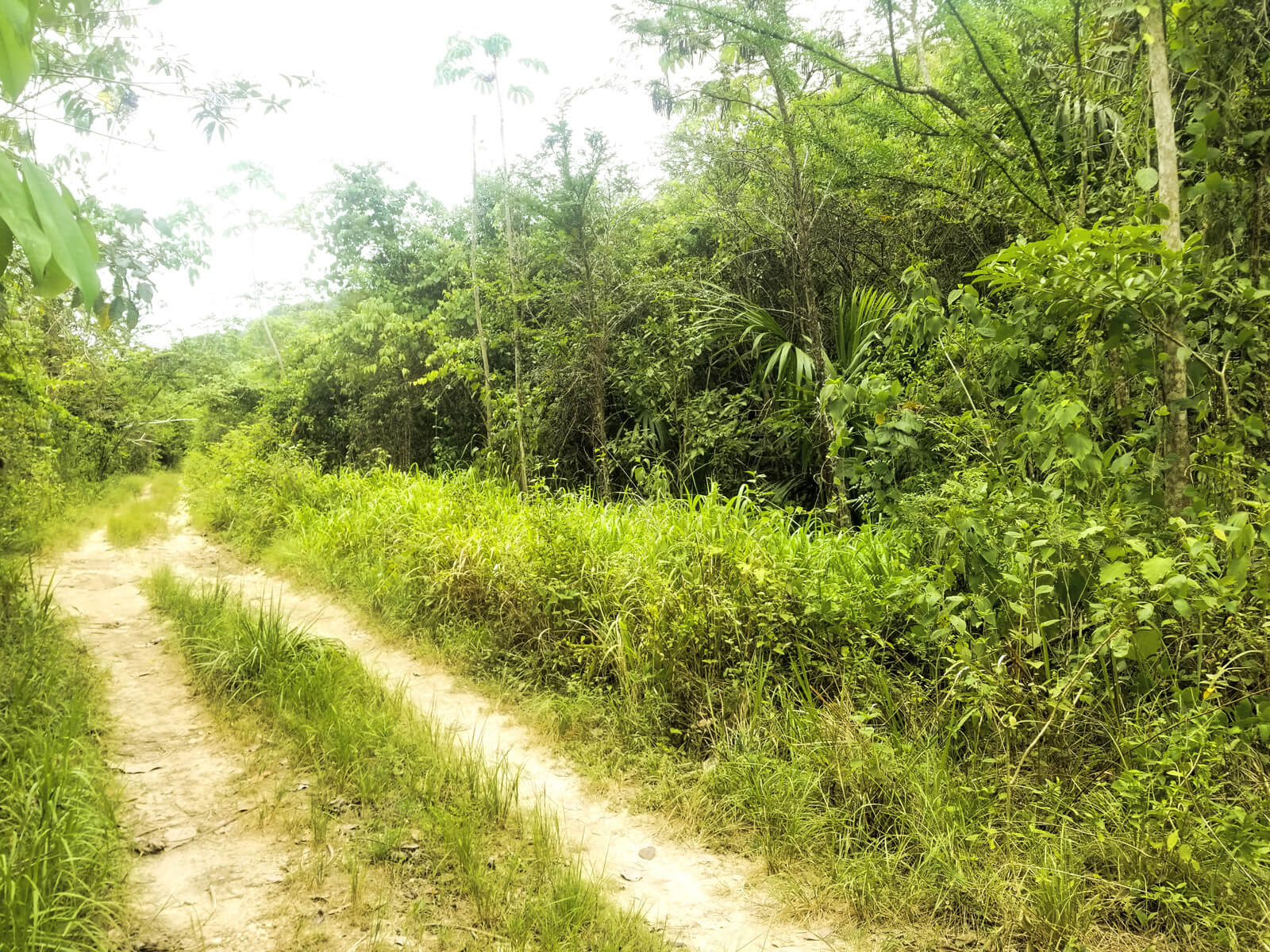 Beautiful Rainforest Land 16 acres of land for sale