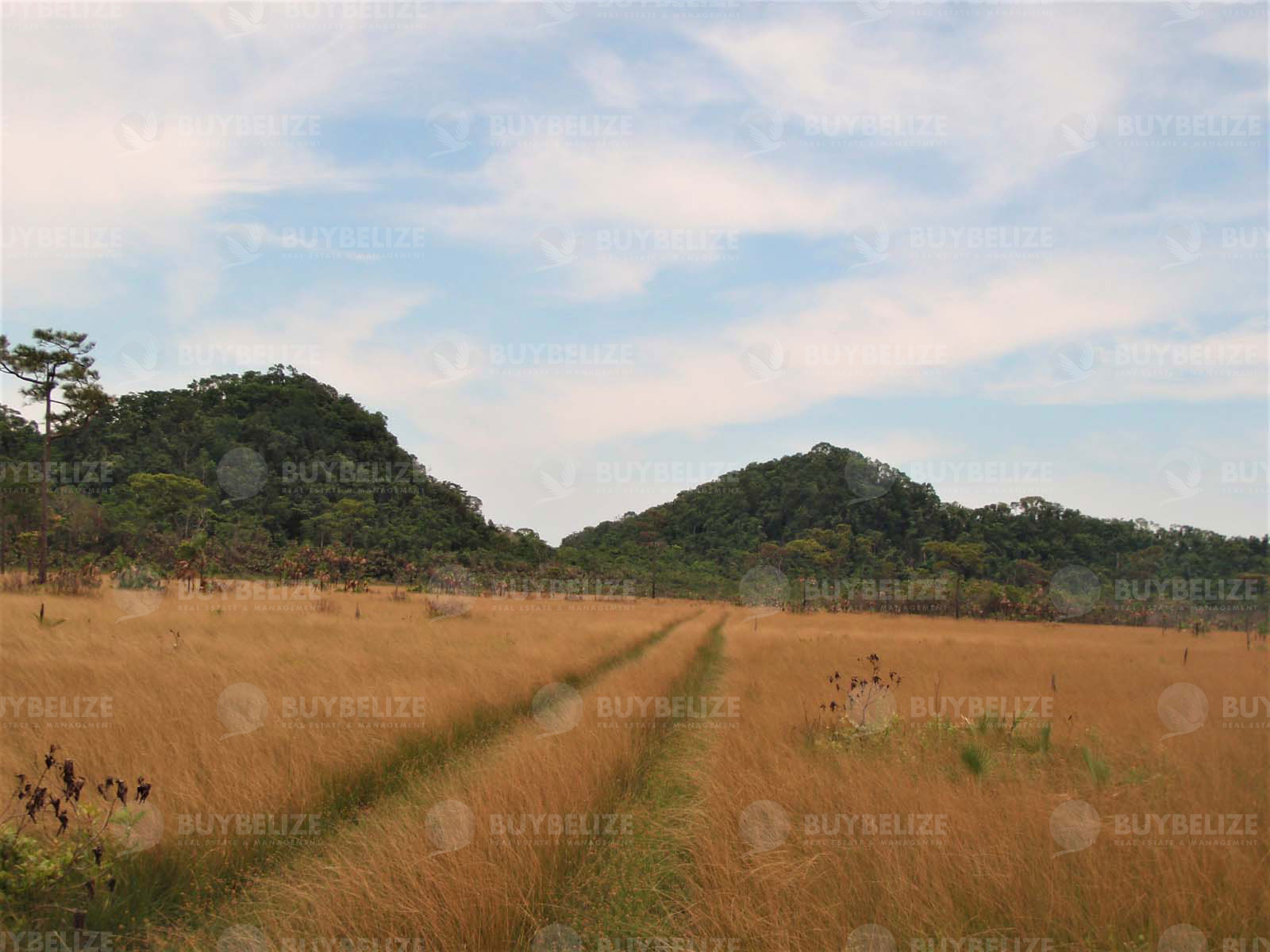 450 Acres on Coastal Road with Lagoon Frontage