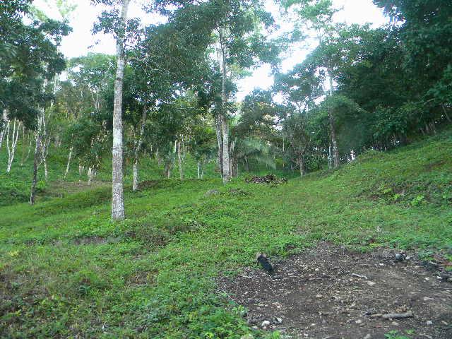 130 acres of  land  view of Maya Mountains