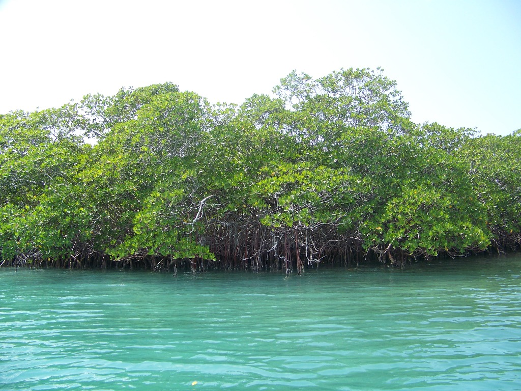 130 acres Island Near Belize City