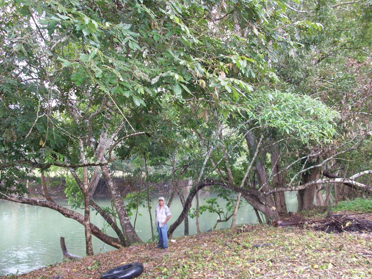 River front ranch near Benque Viejo for sale
