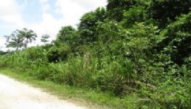 Land for Sale in Belize District