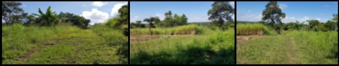 Land for Sale in Cayo District Belize