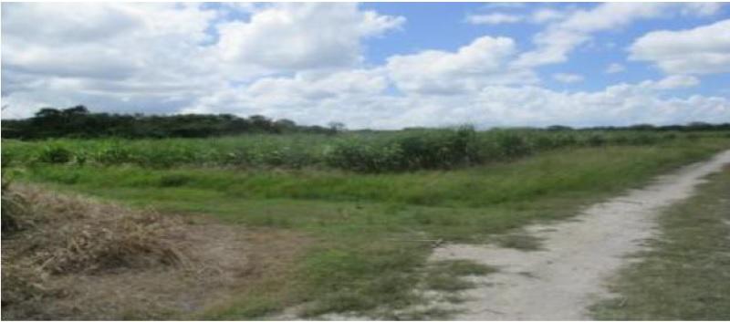 27 Acres Located in Orange Walk District