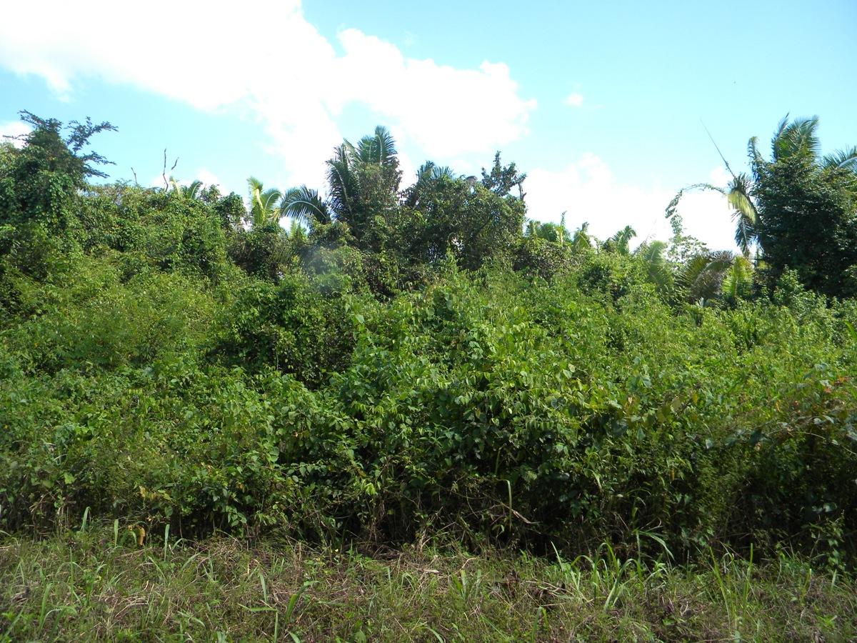 20 Acres in Cotton Tree